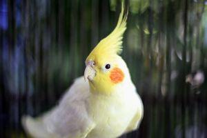 Cuidado de aves, hermosa labor