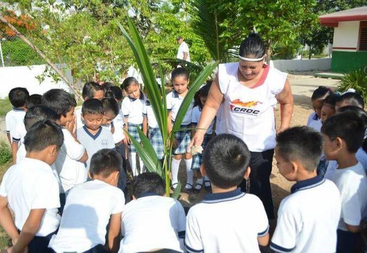 Quintana Roo es una zona donde los árboles como los caoba, cedro, ramón, ciricote y maculí pueden sobrevivir mejor. (Redacción/SIPSE)