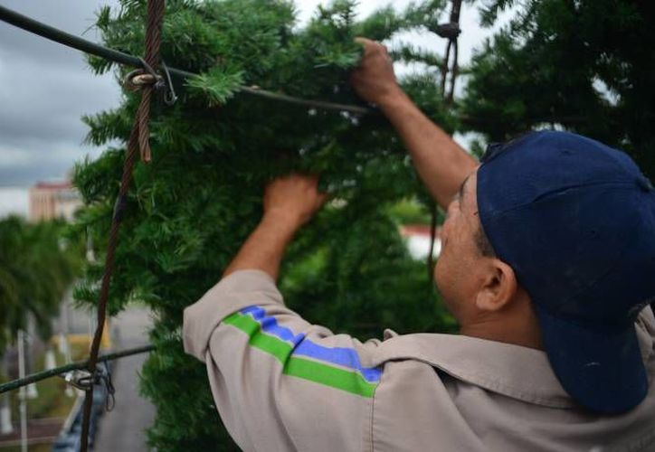 Las secretarias del Medio Ambiente de diversos Estados del país realizan campañas de reciclaje para darle otros usos a los árboles naturales al terminar la temporada navideña. (SIPSE)