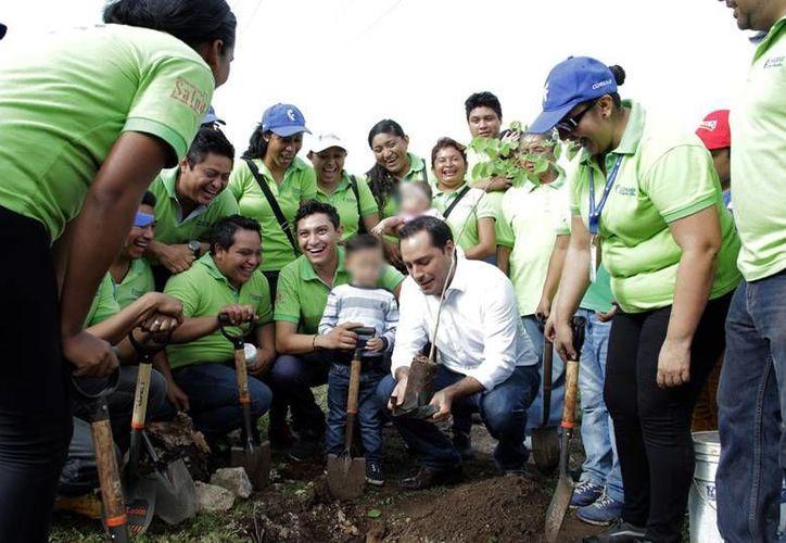 Un plan de reforestación del Ayuntamiento avanza a buen ritmo: ya se plantaron 4,500 árboles en una semana. (Milenio Novedades)