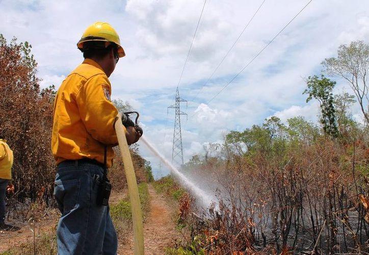 El cuerto incendio está ubicado en Mjahual. (Edgardo Rodríguez/SIPSE)