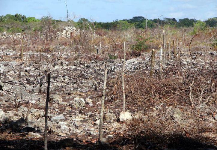 Imagen de los terrenos que fueron invadidos en Hunucmá y a los cuales se les colocaron maderas para para fraccionarlos. (José Acosta/SIPSE)