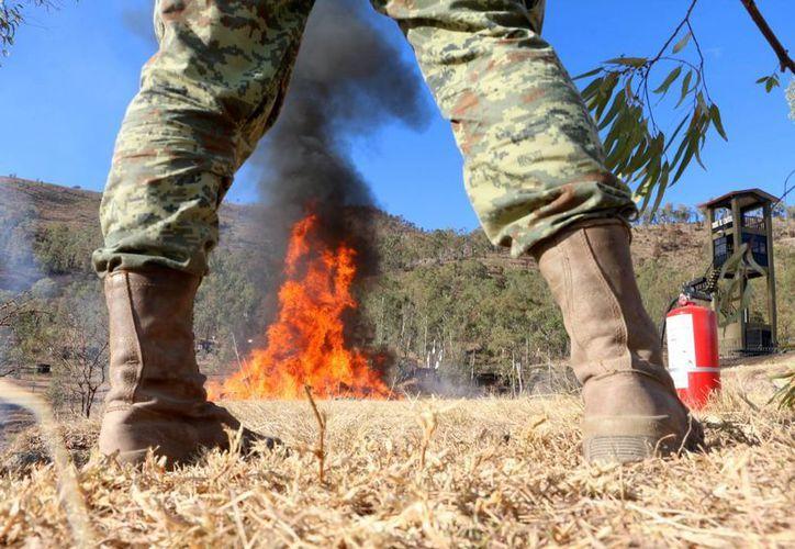 Varios países latinoamericanos, entre ellos México, buscan una nueva estrategia en la lucha contra las drogas.   A Portugal le ha funcionado la despenalización. En la imagen, quema de marihuana decomisada, en Morelia, Michoacán, México, el 14 de abril de 2016. (Archivo/Notimex)