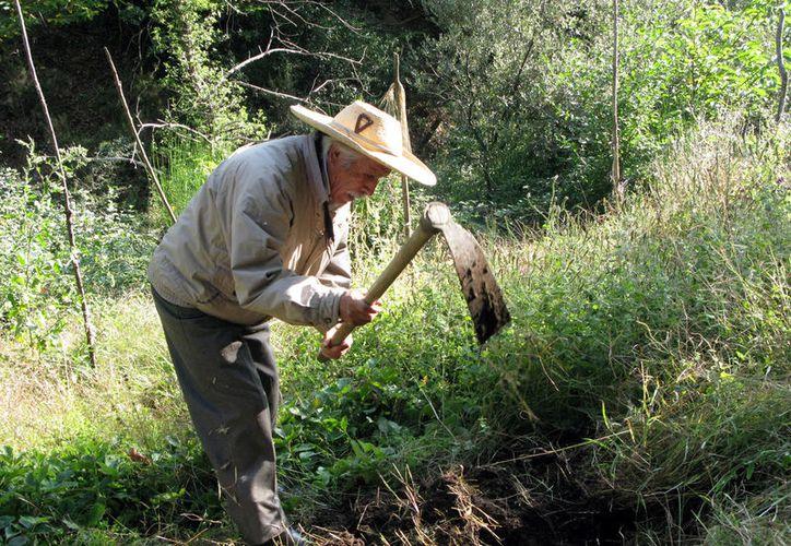 Cada vez los insumos para labrar la tierra aumentan, dejando a los campesinos con poco, o casi nulo, margen de ganancia. (Carlos Castillo/SIPSE)