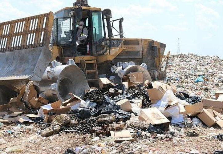 La destrucción de dos toneladas 323 kilos 330 gramos de pepino de mar se realizó en el Relleno Sanitario de Mérida. (SIPSE)