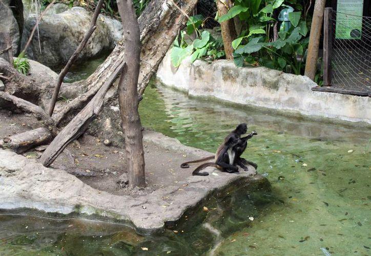 27 animales del zoológico han desaparecido, según dio a conocer la Profepa. (Francisco Sansores/SIPSE)