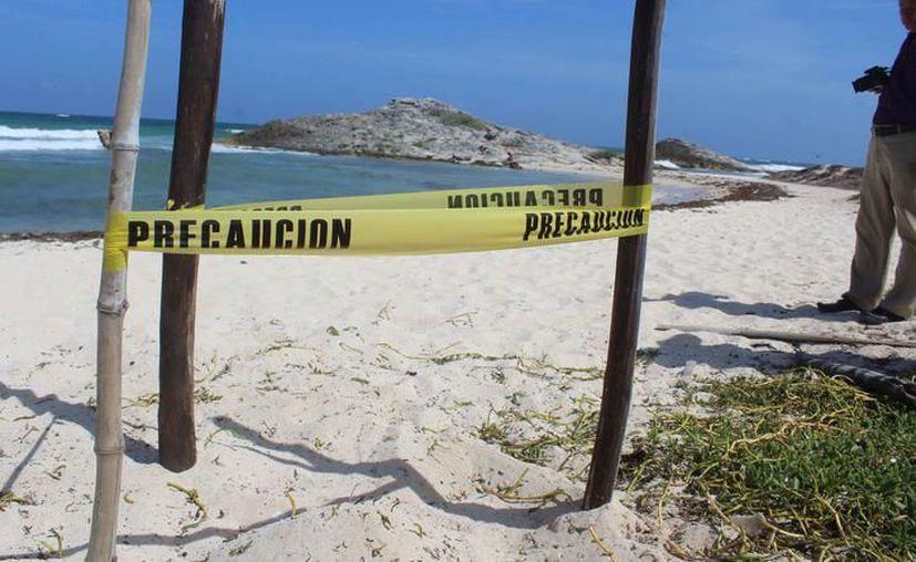 Personal del Instituto de Biodiversidad y Áreas Naturales y voluntarios verifican los nidos de las tortugas. (Foto: SIPSE)