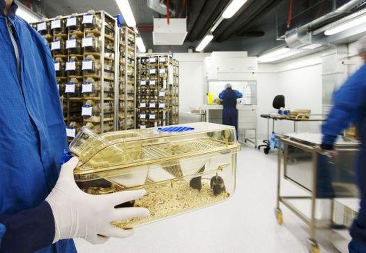 Hasta ahora la cantidad de animales utilizados para encontrar la cura de enfermedades requiere la utilización de varios sujetos de prueba. (El País)