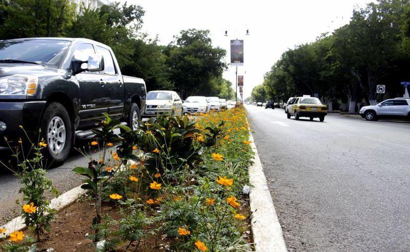 Según la Comuna, unas 12 mil plantas de ornato serán replantadas en el Paseo de Montejo. (Chrisitan Ayala/SIPSE)