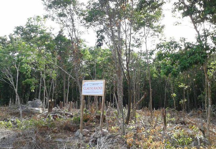 Con la clausura de las áreas se evita que se afecte a la vegetación. (Milenio Novedades)