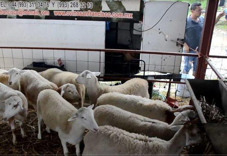 Se analizaron las problemáticas del sector como es de bovinos, ovinos y apicultura. (Juan Rodríguez/ SIPSE)
