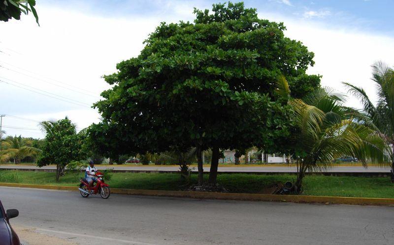 Piden a la poblaci n plantar rboles nativos de la zona for Arboles para sombra de poca raiz