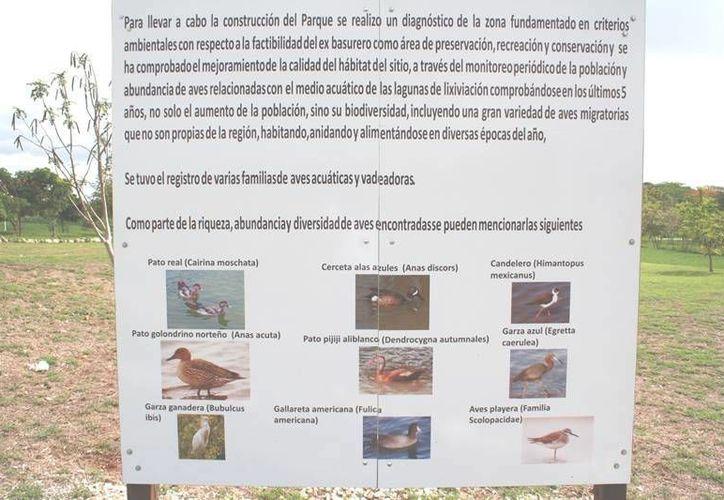 En Mérida existen sitios donde se pueden observar hasta 100 tipos diferentes de aves migratorias, lo cual es poco común en las ciudades. (Facebook/  @seduma.yucatan)