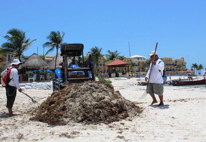 Zofemat recuperará tractor para limpieza de playas. (Archivo/SIPSE).