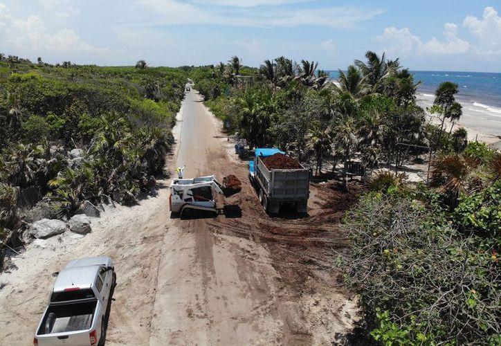 Los volquetes han retirado más de 550 toneladas de alga en menos de 24 horas. (Sara Cauich/SIPSE)