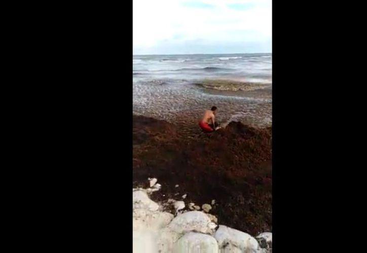 Una mujer fue rescatada por bañistas cuando se ahogaba en la playa más afectada por el sargazo, en Playa del Carmen.  (Impresión de pantalla/Video Facebook)