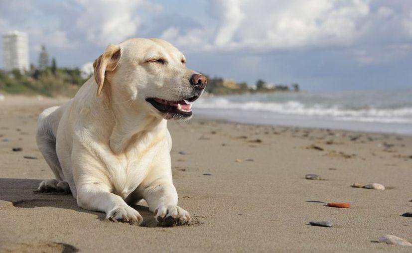 Para tu viaje con tu perro, debes llevar su cama, jaula, accesorios de limpieza, entre otros. Foto: Adoptare