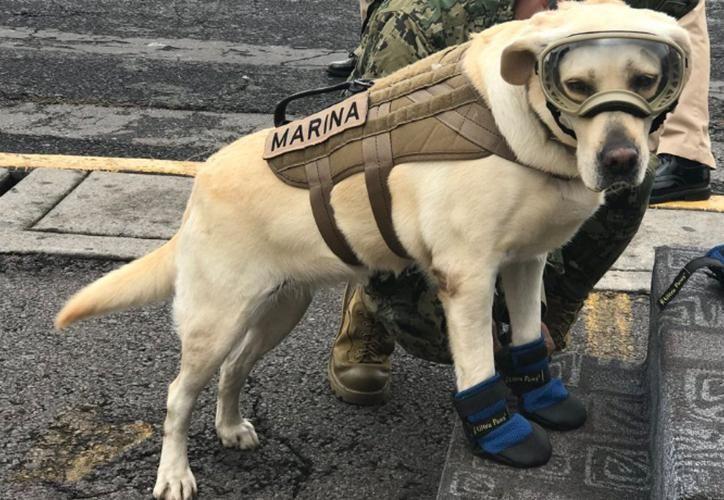 Nuestra canino estrella, se quedará en México. (Internet)