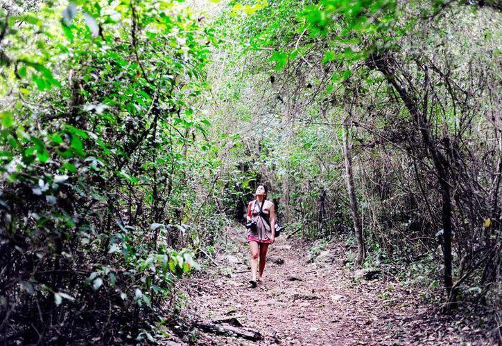 Las comunidades mayas se ofrece la práctica del senderismo. (Milenio Novedades)