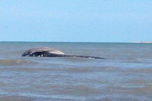 Recala ballena en Progreso