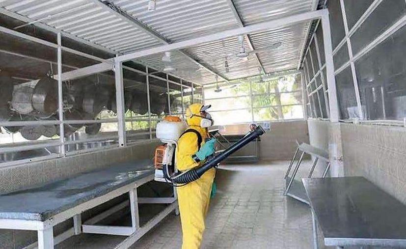 De los 13 reos sospechosos, sólo cuatro permanecen aislados en un módulo y con síntomas leves de esta enfermedad respiratoria. (Novedades Yucatán)