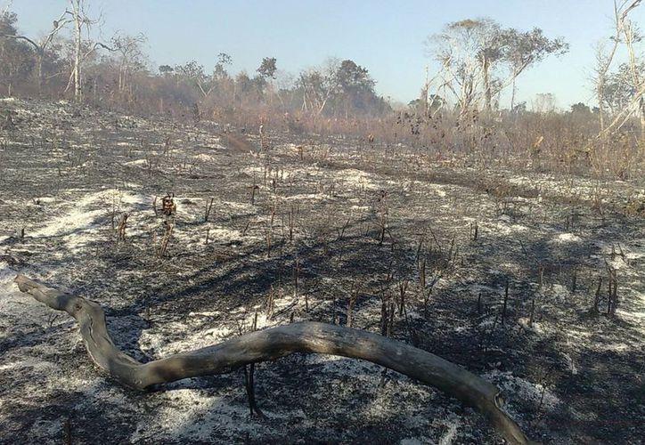 Durante los meses de marzo, abril y mayo es el período en el que se registra mayor número de incendios forestales. (Archivo/SIPSE)