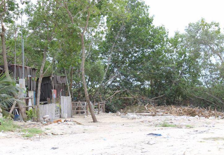 Con tal de asentarse a vivir en Chicxulub puerto, varias familias han deforestado la zona en la costa progreseña. (SIPSE)