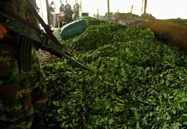 En ese año se integró el desarrollo alternativo al Plan Nacional de Consolidación Territorial con el propósito de enfrentar el problema de las drogas ilícitas en el país, que se ha reducido significativamente en los últimos diez años. (Archivo/EFE)