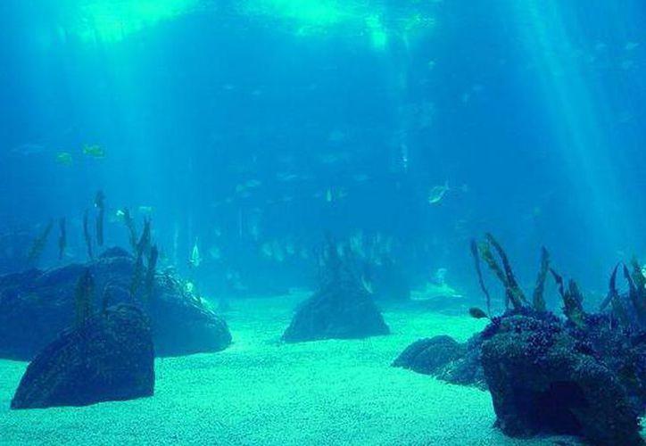 El Festival de los Océanos se realizará del 13 de mayo al 15 de junio. (Contexto)