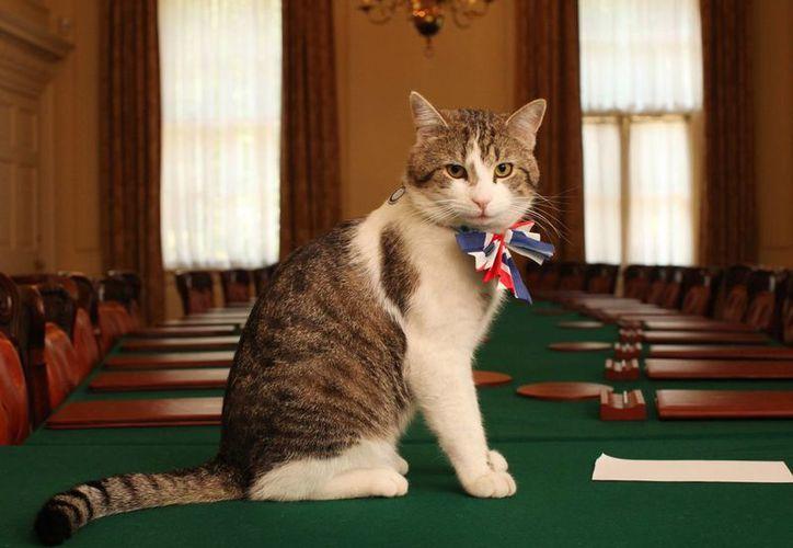 Algunos gatos del  Primer Ministro británico han gozado de sueldo, pero el caso de Larry es distinto: él trabaja sin remuneración. (independent.co.uk)