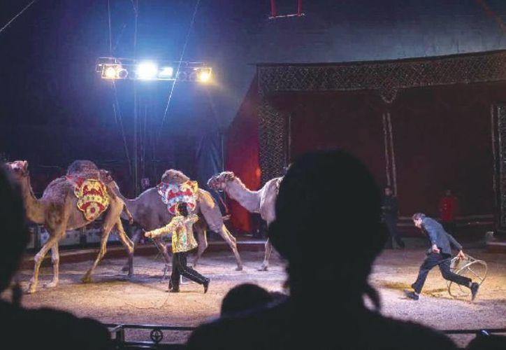 La nueva Ley de protección a la fauna en Yucatán regula el uso de ejemplares en los circos. (Milenio Novedades)
