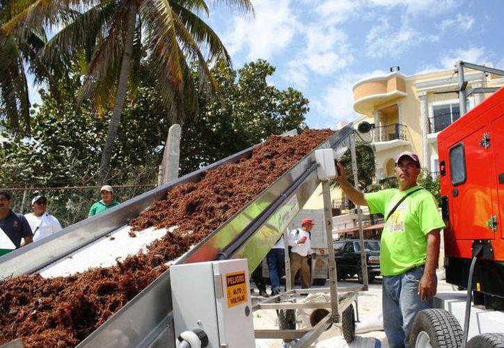 Esta maquinaria fue uno de los tantos proyectos fallidos para retirar el sargazo. (Octavio Martínez/SIPSE)
