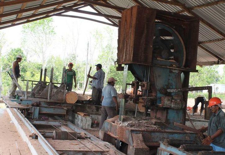 El estado ha perdido gran parte de su riqueza forestal de maderas preciosas, en los últimos 20 años. (Edgardo Rodríguez/SIPSE)