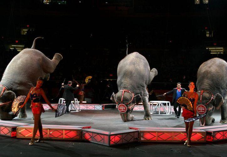 El grupo es uno de varios que demandaron en el 2000 a la propietaria del circo, Feld Entertainment Inc. (about.com)
