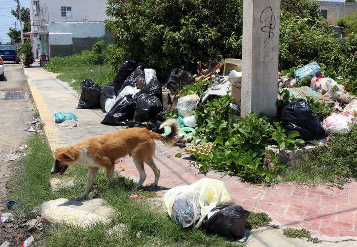 La recolección de basura es sólo uno de los tantos problemas que enfrente al alcalde de Progreso, José Cortés Góngora. En algunas zonas, la ciudad literalmente apesta. (Milenio Novedades)