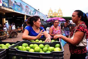 Robos de limón en huertos del sur de Yucatán