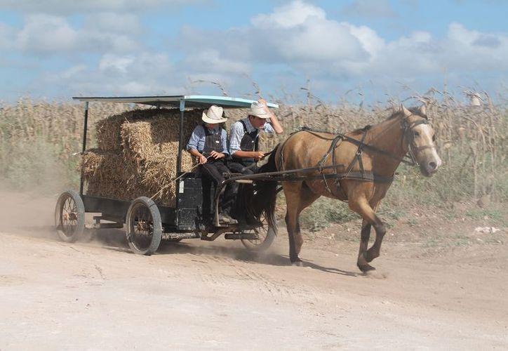 Los menonitas solicitaron permisos para utilizar 900 hectáreas para sus cultivos, pero se extralimitaron. (Javier Ortiz/SIPSE)