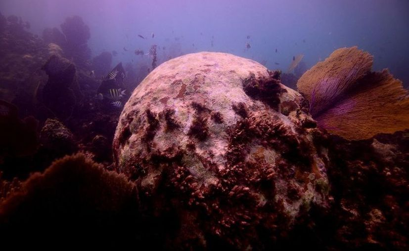 Las aguas negras que se vierten en los ríos subterráneos llegan hasta los corales. (Armando Gasse)