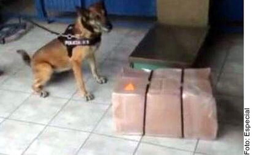 Los osos de peluche rellenos con casi ocho kilos de metanfetamina tenían como destino la ciudad de Tijuana, Baja California. (Agencia Reforma)