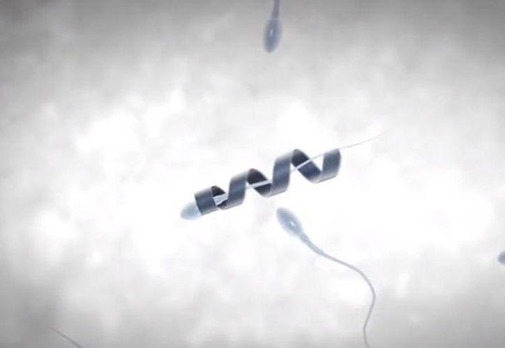 Investigadores del Instituto de Nanociencias Integrativas de Dresden, Alemania, crearon un pequeño cilindro motorizado que ayuda al espermatozoide a llegar al óvulo. (Captura de video de YouTube)