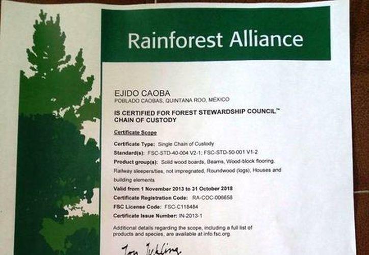 Autoridades aseguran que el ejido Caobas ya cuenta con la certificación ambiental internacional, el cual estará vigente hasta el 2018. (Edgardo Rodríguez/SIPSE)