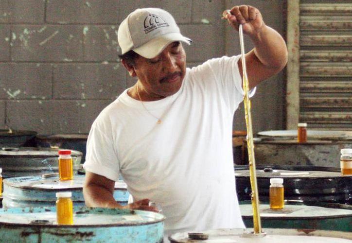 En foros internacionales, yucatecos representarán a México. En uno de los casos, se llevará un católogo de ofertas de los productos yucatecos de exportación, como la miel (foto). (Archivo/SIPSE)