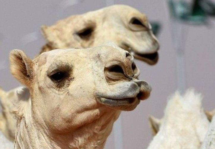 Los jueces calificaban el tamaño de los labios, mejillas, cabeza y rodillas. (Foto: Contexto/Internet).