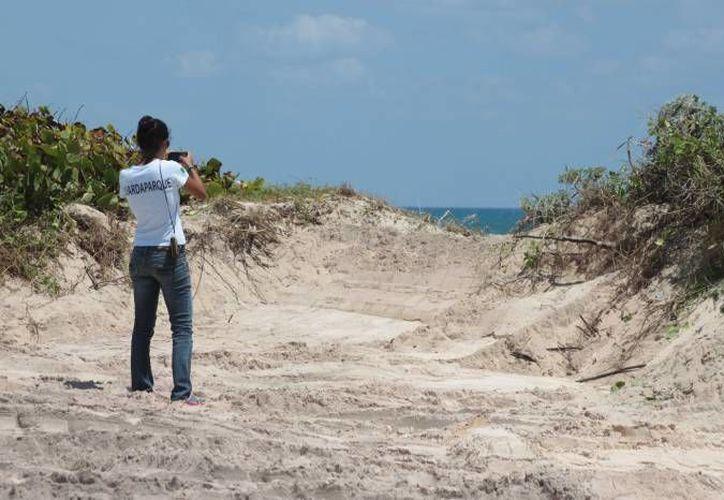 La extracción ilegal de arena ha sido denunciada a la Profepa en Quintana Roo, como sucedió en Punta Morena, Cozumel, el año pasado. (Archivo/SIPSE)