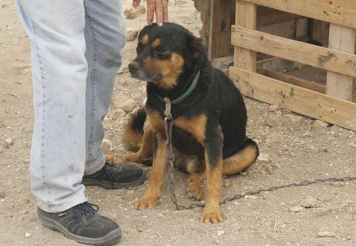 Muchos canes son abandonados. (Foto: Milenio Novedades)