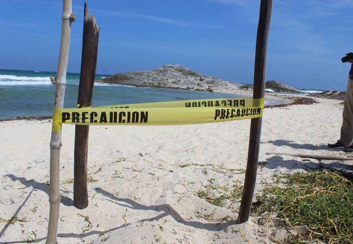 La temporada de arribo de las tortugas inicia oficialmente en mayo. (Sara Cauich/SIPSE)
