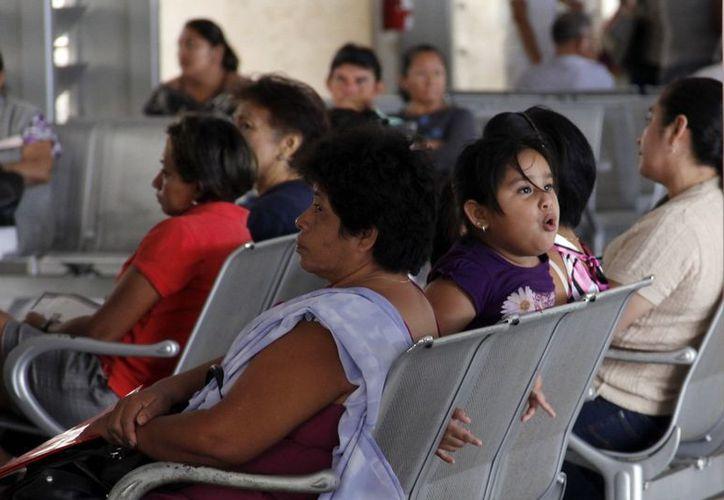 Indican que en los últimos diez años se ha registrado un aumento entre 30 y 40 por ciento en alergias. (Juan Albornoz/SIPSE)