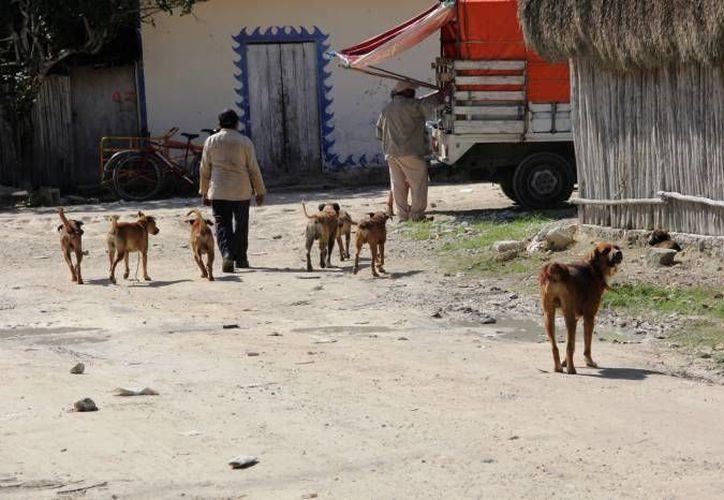 Si alguna persona reclama el perro tendrá que pagar la estancia y la multa por dejar al animal en la vía pública. (Redacción/SIPSE)
