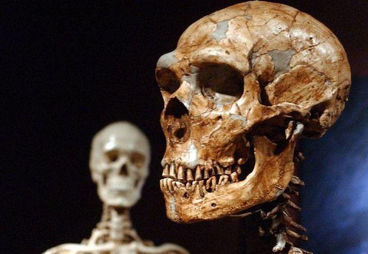 Si resulta cierto, el estudio crea dudas sobre la idea de que los humanos modernos y los neandertales coexistieron. (ornl.gov)