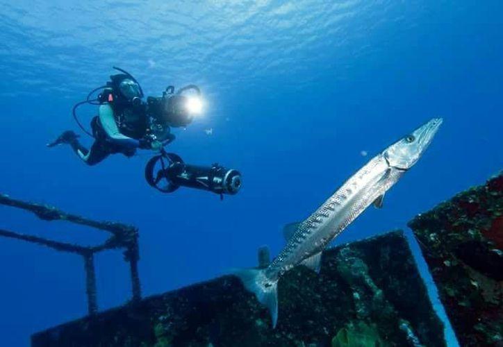 Este es un crustáceo que se descubrió en la década de los 80's. (Octavio Martínez/ SIPSE)